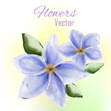 Λουλούδι Watercolor Στοκ φωτογραφία με δικαίωμα ελεύθερης χρήσης