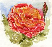 Λουλούδι Watercolour Στοκ Φωτογραφία