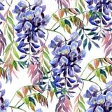 Λουλούδι Wisteria Άνευ ραφής σχέδιο wisteria Watercolor Στοκ φωτογραφία με δικαίωμα ελεύθερης χρήσης