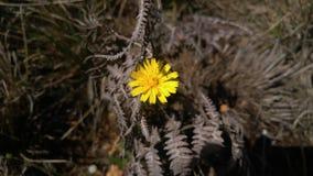 Λουλούδι Yello Στοκ φωτογραφία με δικαίωμα ελεύθερης χρήσης