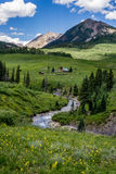 Λοφιοφόρα τοπίο και wildflowers βουνών του Κολοράντο λόφων Στοκ εικόνα με δικαίωμα ελεύθερης χρήσης