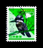 Λοφιοφόρα lugubris Ceryle αλκυόνων, φύση στην Ιαπωνία serie, circa 1994 Στοκ εικόνες με δικαίωμα ελεύθερης χρήσης