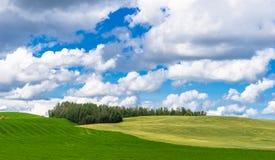 Λοφώδες τοπίο Αλμπέρτα Στοκ φωτογραφία με δικαίωμα ελεύθερης χρήσης
