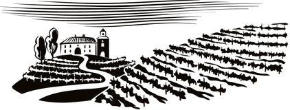 Λοφώδες τοπίο, καλλιεργημένοι αμπελώνες Στοκ εικόνα με δικαίωμα ελεύθερης χρήσης