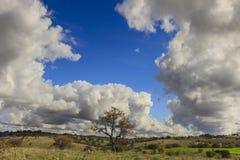 Λοφώδες τοπίο φθινοπώρου Εθνικό πάρκο της Alta Murgia: λιβάδι την άγρια αμυγδαλιά που εξουσιάζεται με από τα σύννεφα Στοκ Εικόνα
