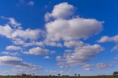 Λοφώδες αγροτικό τοπίο: Εθνικό πάρκο της Alta Murgia, Ιταλία Οροπέδιο Apulian με τα λιβάδια και αγροτική γη για το λιβάδι Στοκ Εικόνα