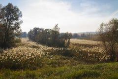 Λοφώδες τοπίο χωρών φθινοπώρου Στοκ εικόνες με δικαίωμα ελεύθερης χρήσης