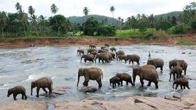 λούζοντας μεγάλη ομάδα ελεφάντων Στοκ φωτογραφία με δικαίωμα ελεύθερης χρήσης