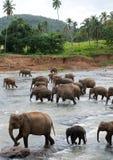 λούζοντας ομάδα ελεφάντων Στοκ Εικόνες