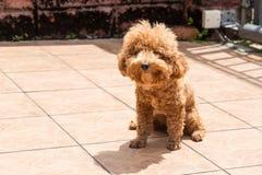 Λούσιμο ήλιων σκυλιών ως θεραπεία για να ανακουφίσει το itchy δέρμα στοκ φωτογραφία