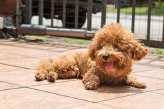 Λούσιμο ήλιων σκυλιών ως θεραπεία για να ανακουφίσει το itchy δέρμα στοκ εικόνα με δικαίωμα ελεύθερης χρήσης