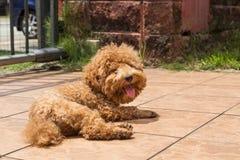 Λούσιμο ήλιων σκυλιών ως θεραπεία για να ανακουφίσει το itchy δέρμα στοκ εικόνα