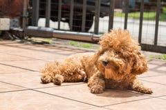Λούσιμο ήλιων σκυλιών ως θεραπεία για να ανακουφίσει το itchy δέρμα στοκ εικόνες με δικαίωμα ελεύθερης χρήσης