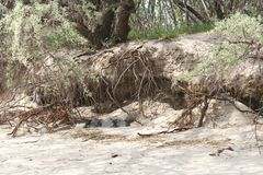 Λούσιμο δέντρων στην παραλία Στοκ Εικόνες