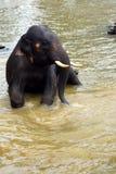 Λούσιμο ελεφάντων μωρών στον ποταμό στοκ εικόνες