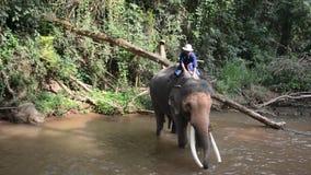 Λούσιμο ελεφάντων στον ποταμό απόθεμα βίντεο