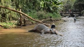 Λούσιμο ελεφάντων στον ποταμό φιλμ μικρού μήκους