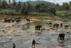 Λούσιμο των ελεφάντων Σρι Λάνκα στοκ εικόνες
