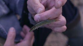 Λούτσοι ζωντανών ψαριών σε έναν γάντζο απόθεμα βίντεο