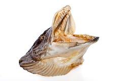 Λούτσοι σκιάχτρων esox ανασκόπησης απομονωμένο ψάρια λευκό λούτσων lucius Στοκ εικόνες με δικαίωμα ελεύθερης χρήσης
