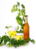 λυκίσκοι μπύρας Στοκ φωτογραφία με δικαίωμα ελεύθερης χρήσης