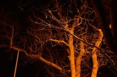 Λυκόφως στα δασικά, τρομακτικά δέντρα, απόκρυφο σκοτεινό υπόβαθρο αποκριών grunge Στοκ φωτογραφία με δικαίωμα ελεύθερης χρήσης