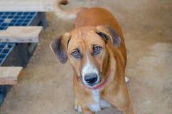 Λυπημένα μάτια του σκυλιού στην αποθήκη εμπορευμάτων Στοκ φωτογραφίες με δικαίωμα ελεύθερης χρήσης