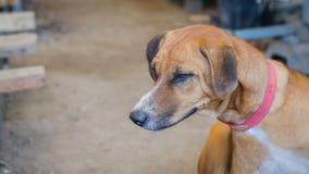 Λυπημένα μάτια του σκυλιού στην αποθήκη εμπορευμάτων Στοκ Φωτογραφίες