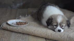 Λυπημένες άστεγες πτώσεις κουταβιών κοιμισμένες δίπλα σε ένα πιάτο της τροφής, με ένα κομμάτι burlap απόθεμα βίντεο