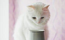 Λυπημένη άσπρη γάτα Στοκ Εικόνα
