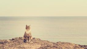 Λυπημένη άστεγη συνεδρίαση γατών στην παραλία Στοκ Φωτογραφία