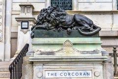Λυπημένη κλειστή λιοντάρι Cochran στοά της τέχνης Washington DC Στοκ εικόνα με δικαίωμα ελεύθερης χρήσης
