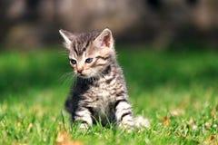 Λυπημένη συνεδρίαση γατακιών στην πράσινη χλόη, που κοιτάζει μακρυά από τη κάμερα Στοκ φωτογραφία με δικαίωμα ελεύθερης χρήσης