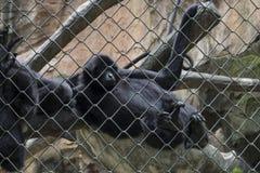 Λυπημένος αστείος πίθηκος μέσα στο κλουβί Στοκ φωτογραφία με δικαίωμα ελεύθερης χρήσης