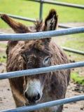 Λυπημένος γάιδαρος σε ένα αγρόκτημα στοκ φωτογραφίες με δικαίωμα ελεύθερης χρήσης