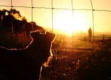Λυπημένος ιδιοκτήτης ρολογιών σκυλιών διάσωσης που αφήνει τον άστεγο Στοκ εικόνα με δικαίωμα ελεύθερης χρήσης