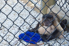 Λυπημένος πίθηκος σε ένα κλουβί που αγκαλιάζει ένα παιχνίδι Στοκ φωτογραφίες με δικαίωμα ελεύθερης χρήσης