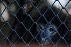 Λυπημένος πίθηκος στοκ εικόνες με δικαίωμα ελεύθερης χρήσης