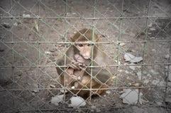 Λυπημένος πίθηκος Στοκ φωτογραφίες με δικαίωμα ελεύθερης χρήσης