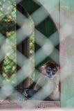 Λυπημένος πίθηκος Στοκ εικόνα με δικαίωμα ελεύθερης χρήσης