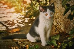 Λυπημένο άστεγο γατάκι στοκ φωτογραφίες
