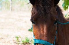 Λυπημένο άλογο μόνο σε ένα αγρόκτημα επαρχίας Στοκ Εικόνα