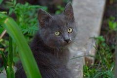 Λυπημένο γκρίζο γατάκι στην πράσινη χλόη Στοκ Φωτογραφίες