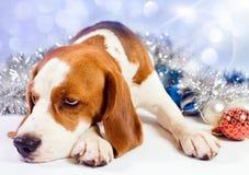 Λυπημένο κυνηγόσκυλο στοκ φωτογραφία με δικαίωμα ελεύθερης χρήσης