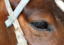 Λυπημένο μάτι αλόγων. Κοιτάξτε. Στοκ Φωτογραφίες