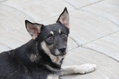 Λυπημένο περιπλανώμενο σκυλί στοκ εικόνες
