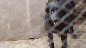 Λυπημένο σκυλί σε μια αιχμαλωσία απόθεμα βίντεο