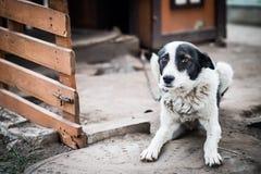 Λυπημένο σκυλί σε μια αλυσίδα κοντά στο θάλαμό τους Στοκ φωτογραφίες με δικαίωμα ελεύθερης χρήσης