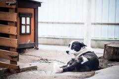 Λυπημένο σκυλί σε μια αλυσίδα κοντά στο θάλαμό τους Στοκ εικόνα με δικαίωμα ελεύθερης χρήσης