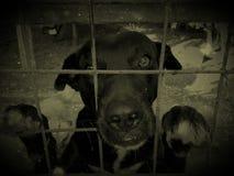 Λυπημένο σκυλί στο κλουβί Στοκ Φωτογραφία